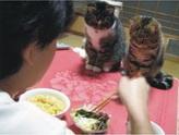 用餐时间到了,看可爱猫猫们